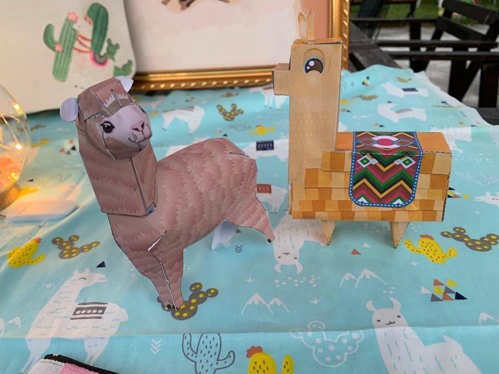 菠蘿園-羊駝