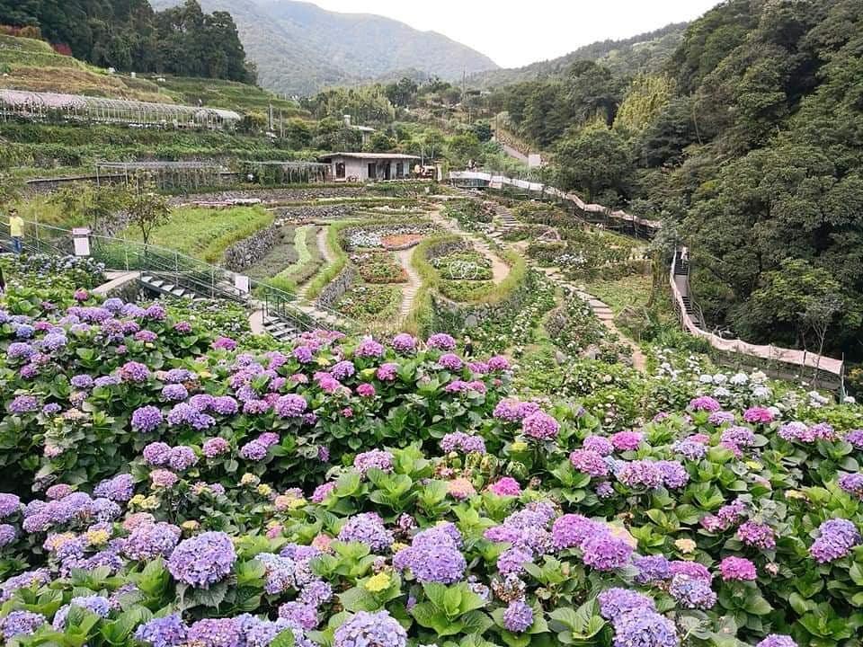 陽明山溫泉景點-大梯田花卉生態農園