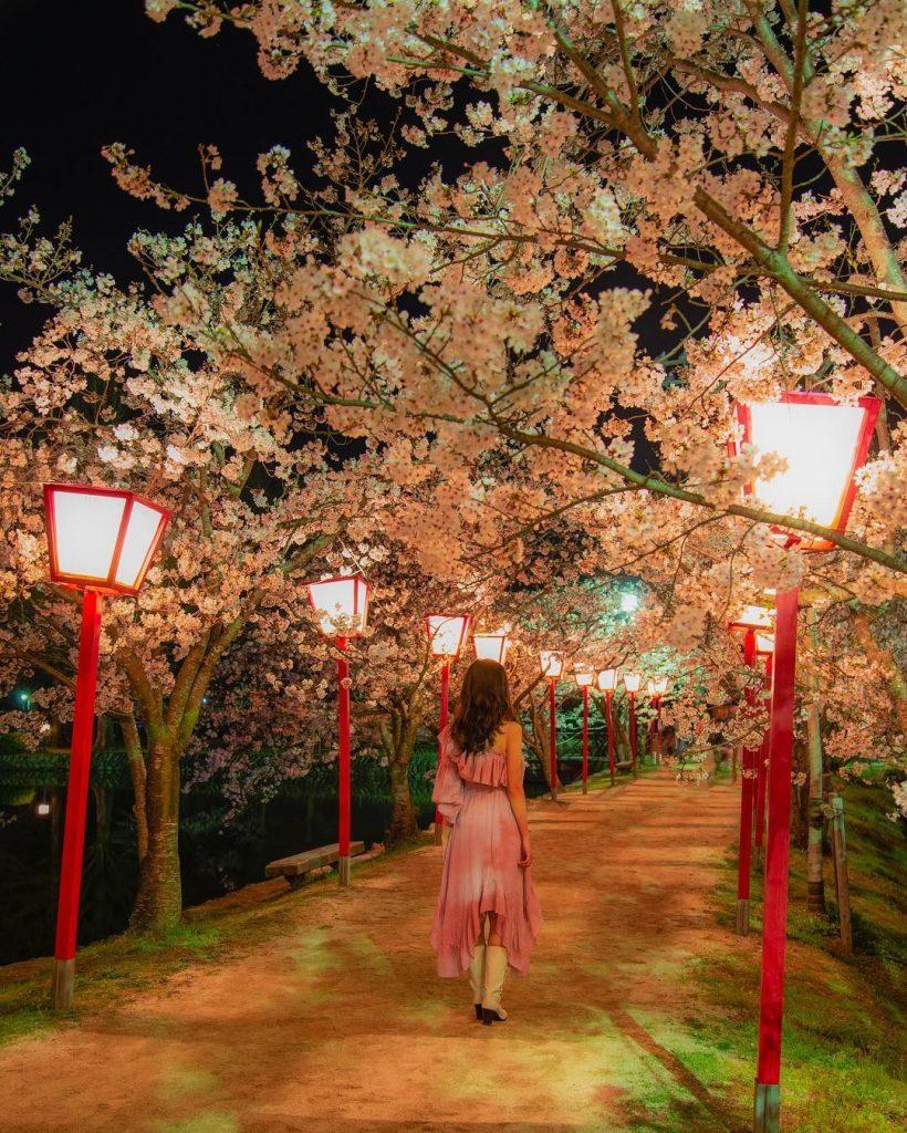 九州櫻花2020