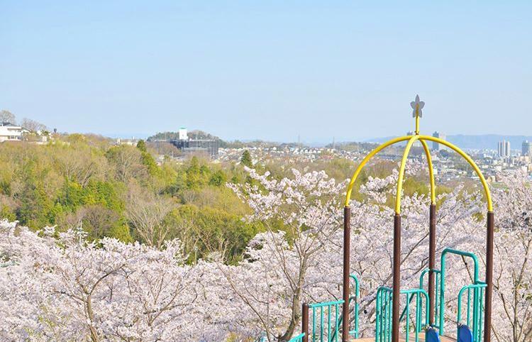 大阪櫻花2020