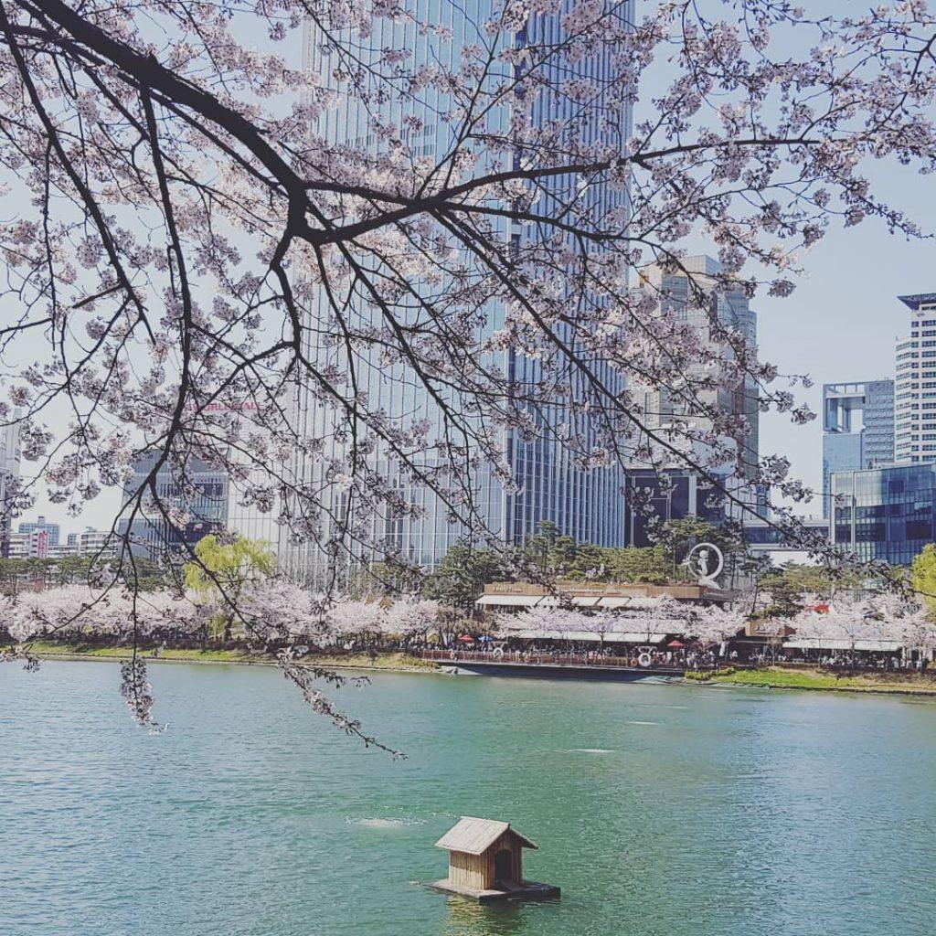 首爾櫻花2020