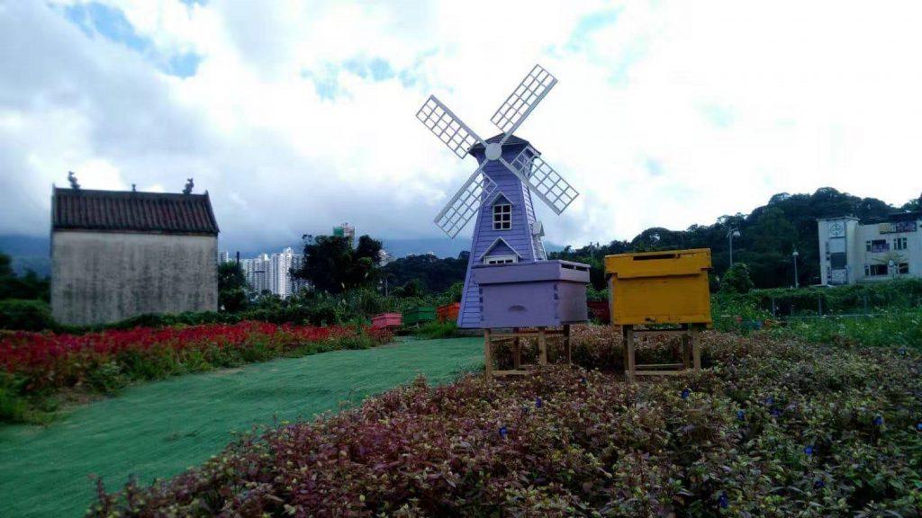 大埔蝶豆花園有機農莊風車