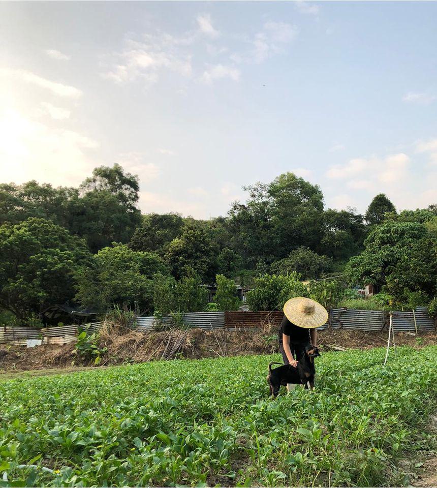 富琴火龍果有機農莊