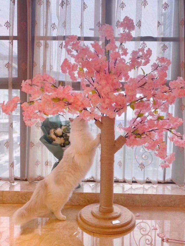 永安旅遊生活館-櫻花祭